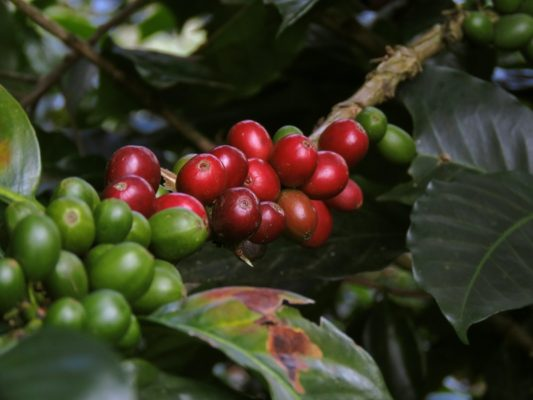 5 Italian Coffee Facts you should know- right from why it is so famous to where Italian coffee is sourced from the world.